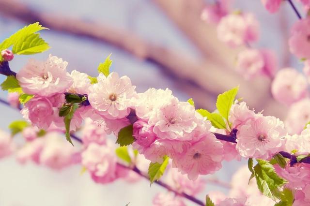 描写春暖花开的季节的句子【四月花开的季节优美的句子】