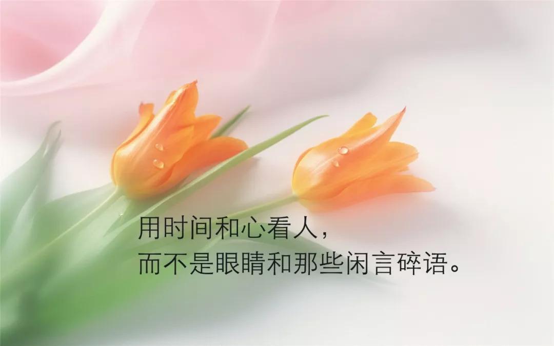 茶语人生哲理句子经典【清茶一杯表达心情的句子】
