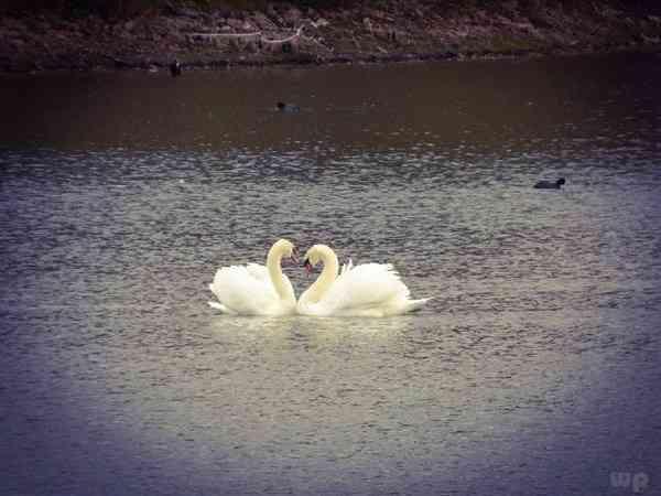 表白的爱情句子【古诗词表白爱情句子】