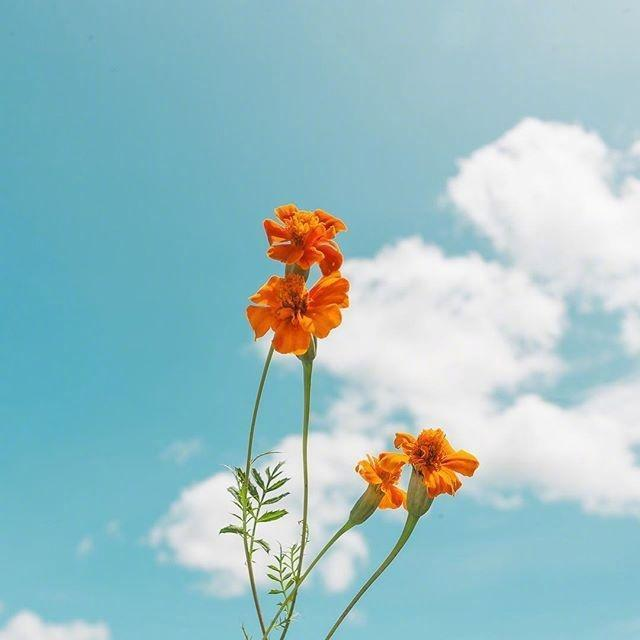 阳光向上正能量的句子【积极努力向上正能量的句子】