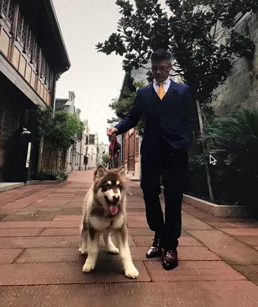 赞美狗狗的英文句子【赞美狗狗忠诚的句子】