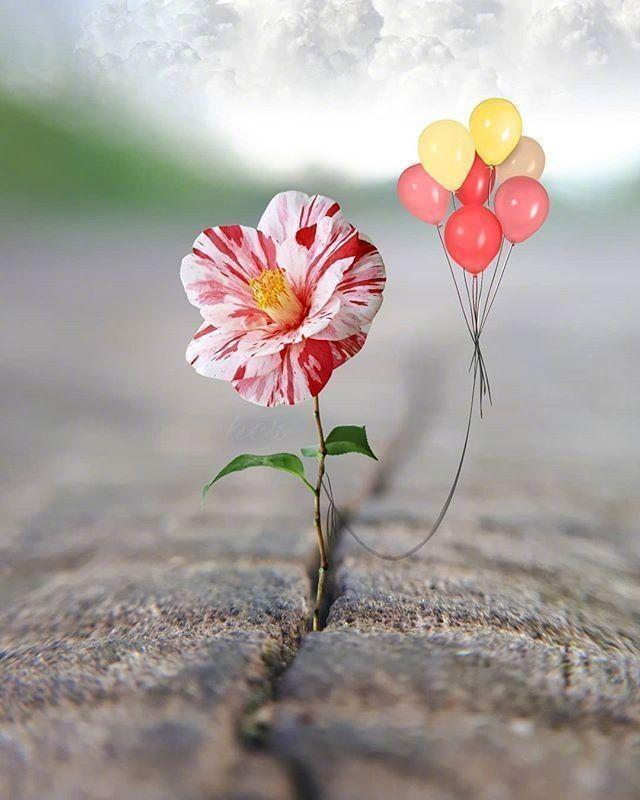 唯美浪漫励志句子【关于励志的唯美句子】