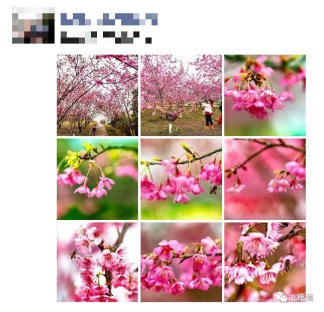 春暖花开的季节发朋友圈的句子【形容春暖花开的季节的句子】