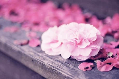 恋爱心语唯美的句子【恋爱的感觉唯美的句子】
