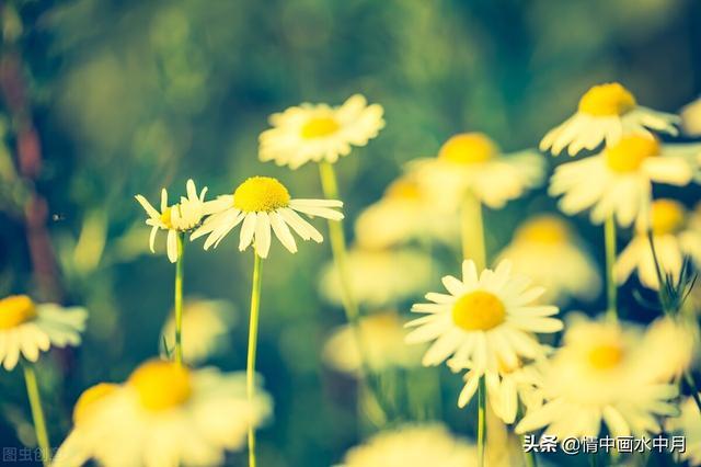 冬天清晨的阳光唯美句子朋友圈【清晨的第一缕阳光唯美句子】