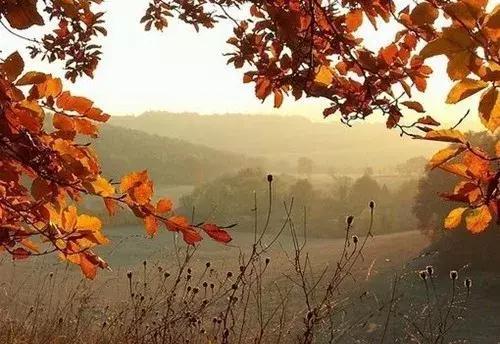 秋去冬来季节交替的暖心句子【季节变化的句子】