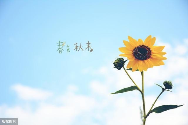 描写五月季节的句子【赞美八月的句子简短】